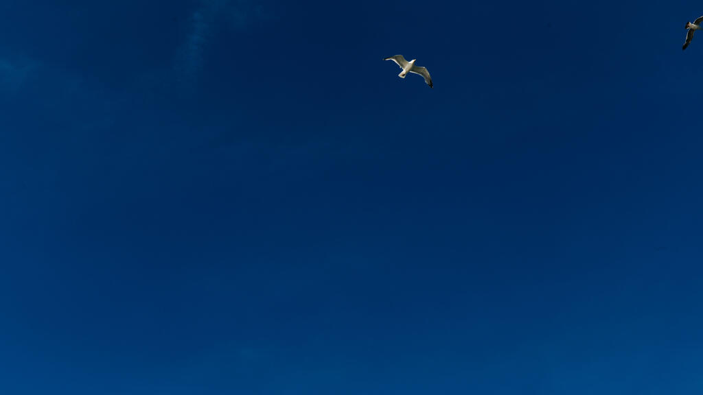 Bird Soaring in the Sky large preview