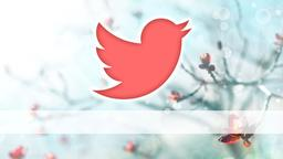 Spring Bloom twitter PowerPoint image