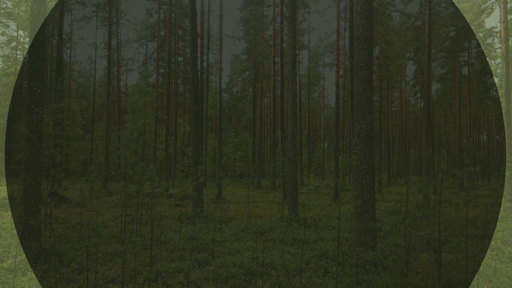 Dark-Forest large preview