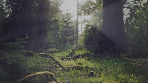 Summer-Woods