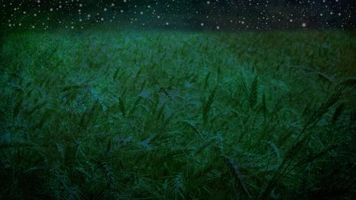 Starry-Fields
