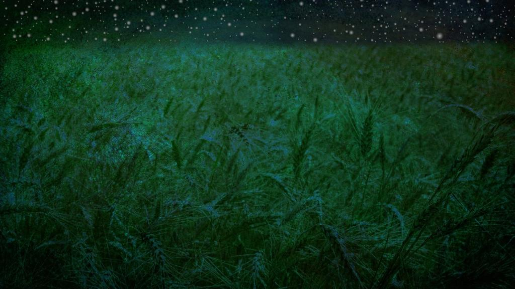 Starry-Fields large preview