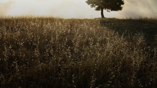 Sunlight-Tree