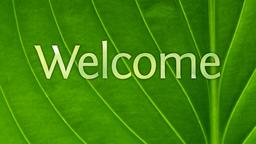 Summer Leaves welcome PowerPoint image