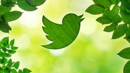 Summer Leaves twitter PowerPoint image