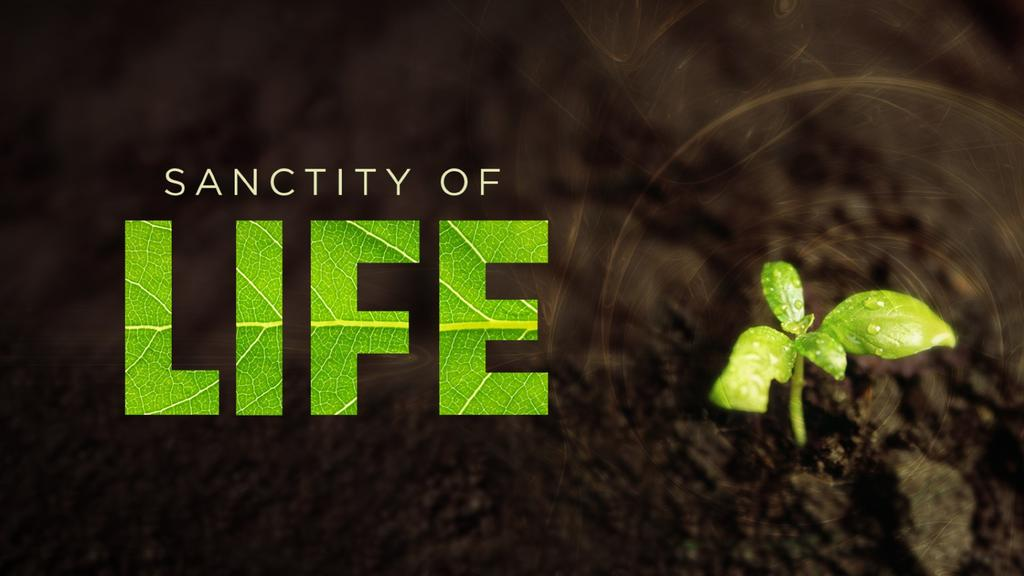 Sanctity-of-Life large preview