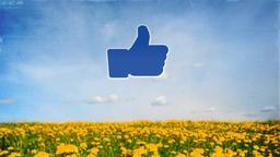 Dandelion Field facebook PowerPoint image