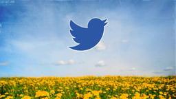 Dandelion Field twitter PowerPoint image