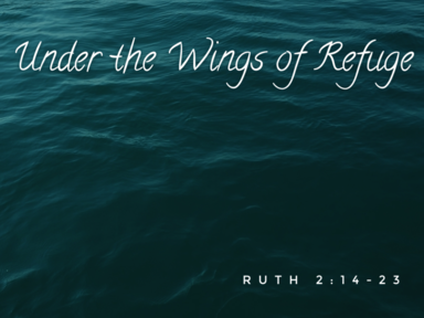 Under The Wings of Refuge