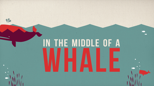In The Middle of a WHALE