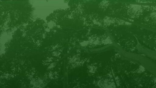 Green Trees - Content - Motion