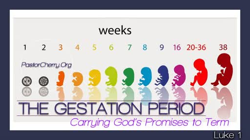 The Gestation Period