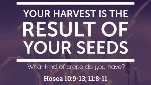 Your  Harvest is the Result of Your Seeds