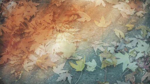 Fallen Leaves 3-Wide 16X9