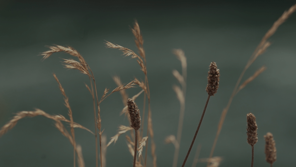 Normal Wildgrass large preview