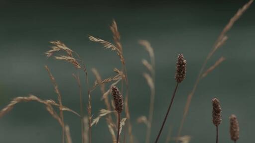 Normal Wildgrass - Content - Motion