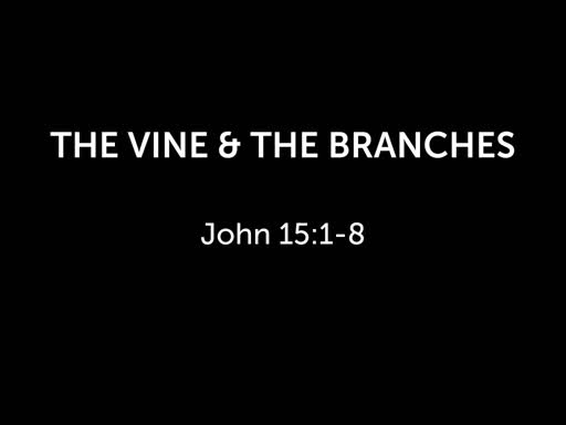 The Vine & the branches
