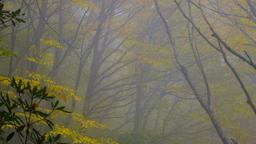 Autumn Trees sermon title 16x9 PowerPoint image