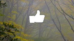 Autumn Trees facebook 16x9 PowerPoint image