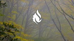 Autumn Trees faithlife 16x9 PowerPoint image