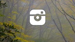 Autumn Trees instagram 16x9 PowerPoint image