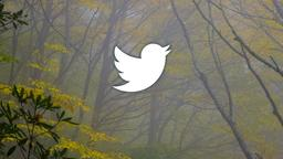 Autumn Trees twitter 16x9 PowerPoint image