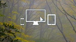 Autumn Trees website 16x9 PowerPoint image