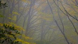 Autumn Trees header subheader 16x9 PowerPoint image