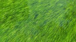 Grass in Water content a PowerPoint image