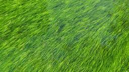 Grass in Water sermon title 16x9 PowerPoint image