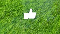 Grass in Water facebook 16x9 PowerPoint image