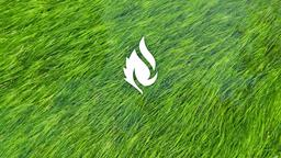 Grass in Water faithlife 16x9 PowerPoint image