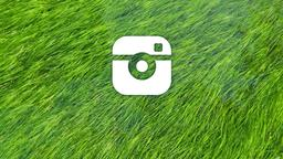 Grass in Water instagram 16x9 PowerPoint image
