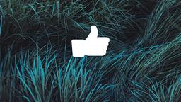 Grasses facebook 16x9 PowerPoint image