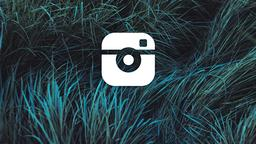 Grasses instagram 16x9 PowerPoint image
