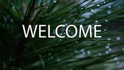 Pine Needle welcome 16x9 PowerPoint image