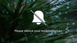 Pine Needle phones 16x9 PowerPoint image