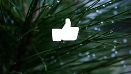 Pine Needle facebook 16x9 PowerPoint image