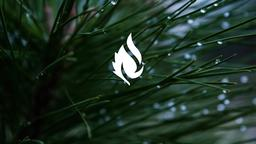Pine Needle faithlife 16x9 PowerPoint image