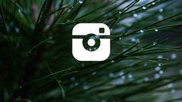 Pine Needle instagram 16x9 PowerPoint image