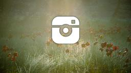 Poppy Field instagram 16x9 PowerPoint image