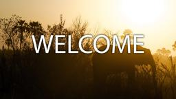 Elephant welcome 16x9 PowerPoint image