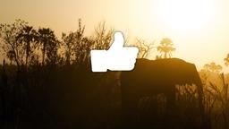 Elephant facebook 16x9 PowerPoint image