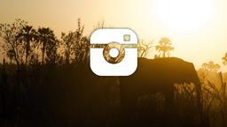 Elephant instagram 16x9 PowerPoint image