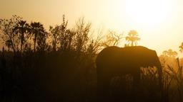 Elephant header subheader 16x9 PowerPoint image