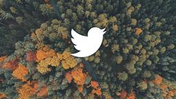 Above the Trees twitter 16x9 PowerPoint image