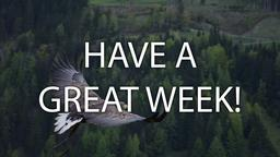 Bird Soaring  PowerPoint image 4