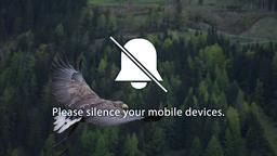 Bird Soaring  PowerPoint image 5