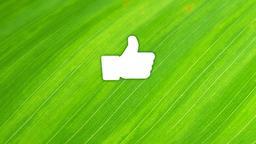 Leaf facebook 16x9 PowerPoint image