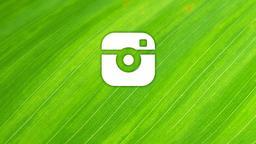 Leaf instagram 16x9 PowerPoint image